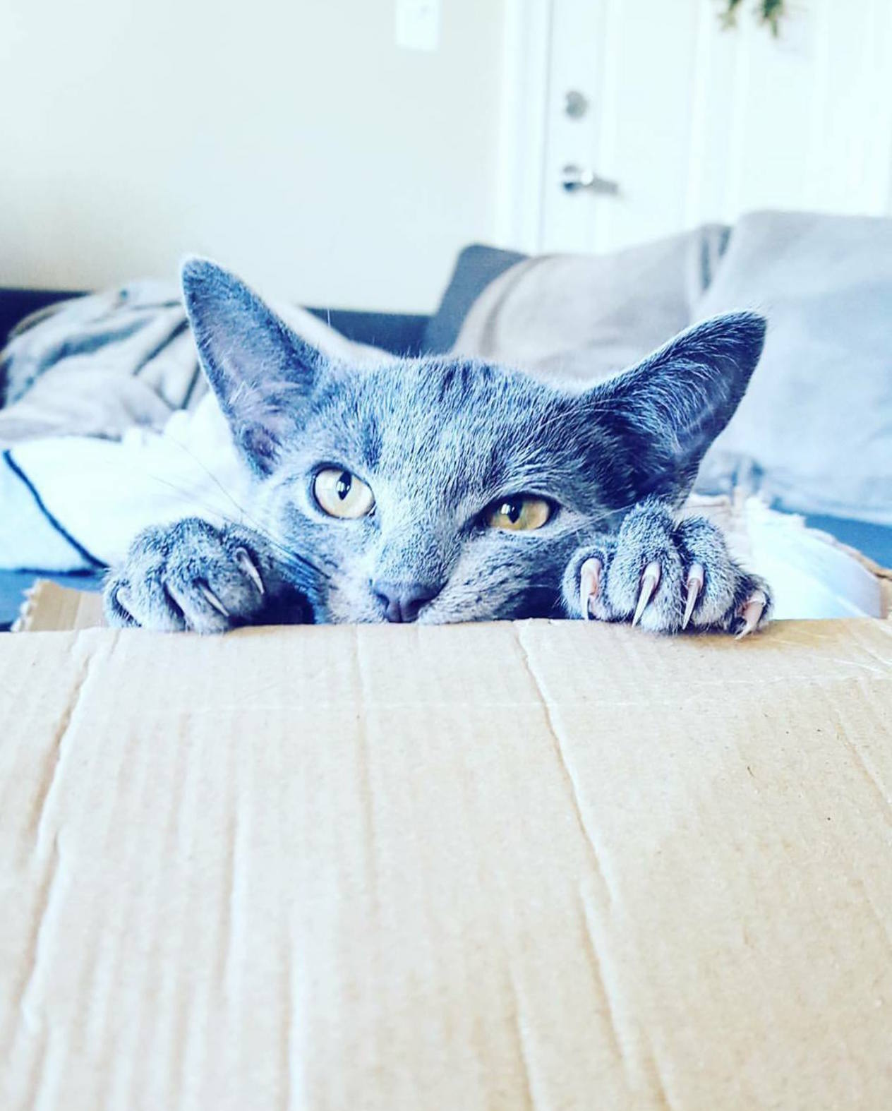 I also like boxes!