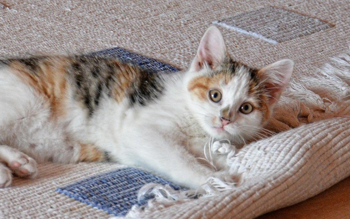 cat-535011_1920.jpg