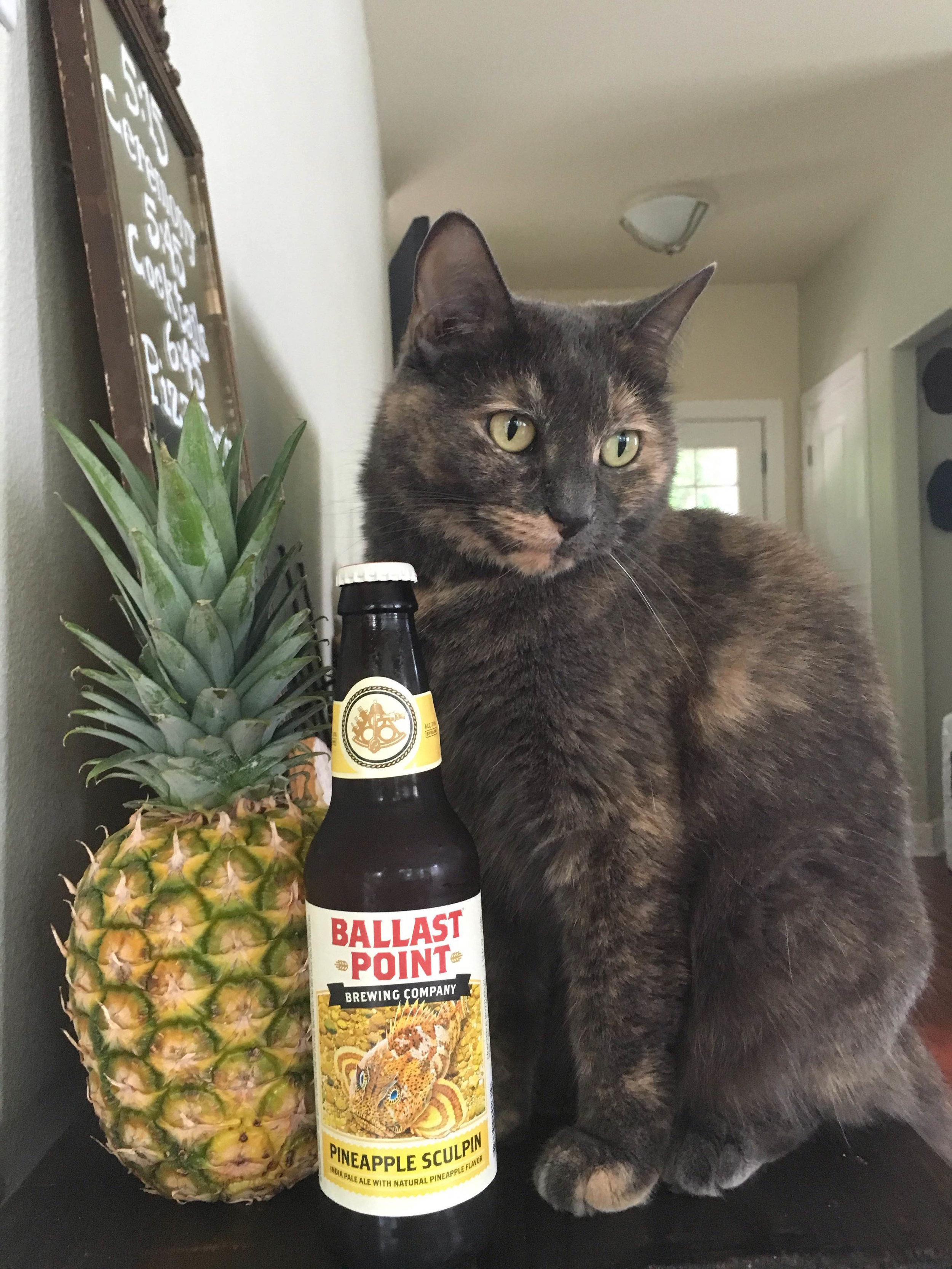 It's five o'clock somewhere … but it doesn't matter what time it is cuz Mary's a cat….