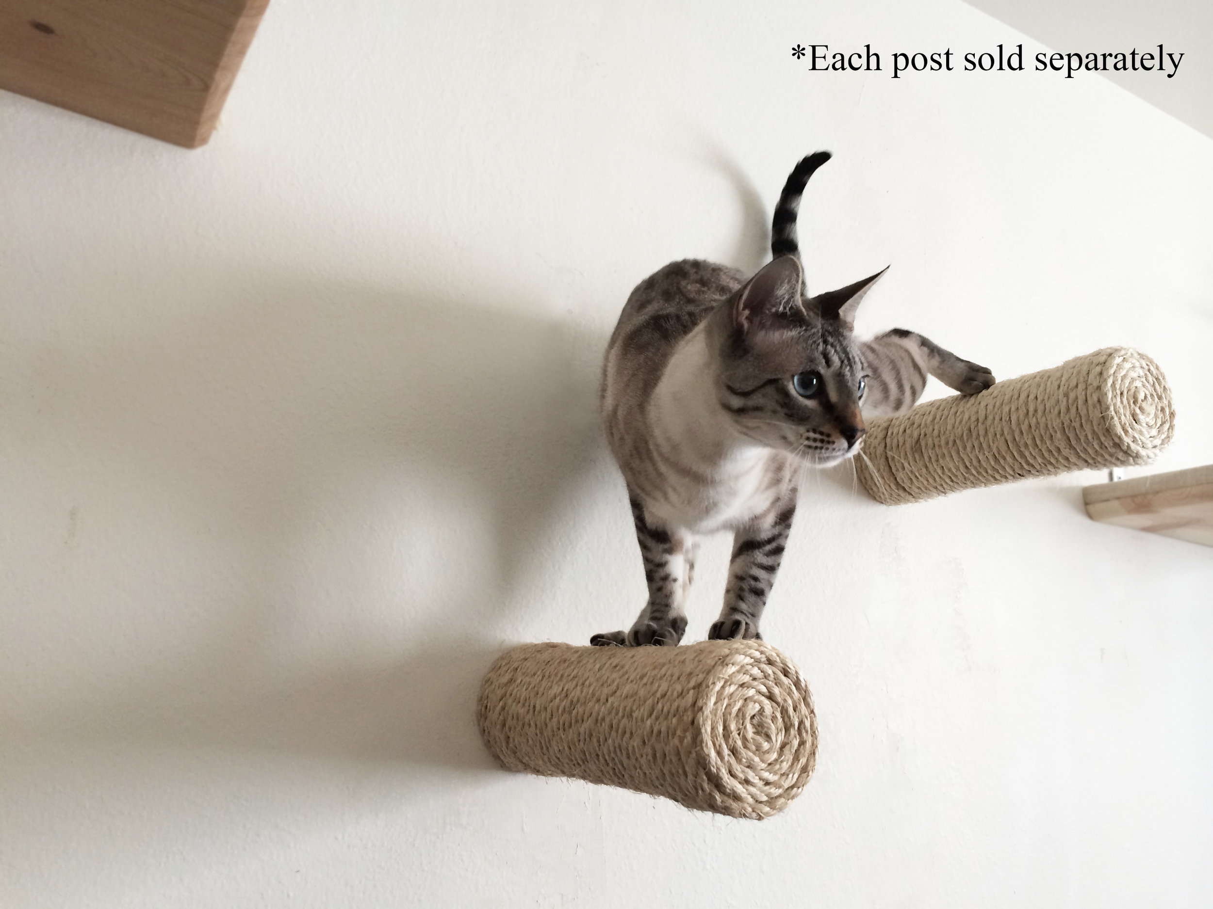 Floating sisal posts: way better than a cat tree.