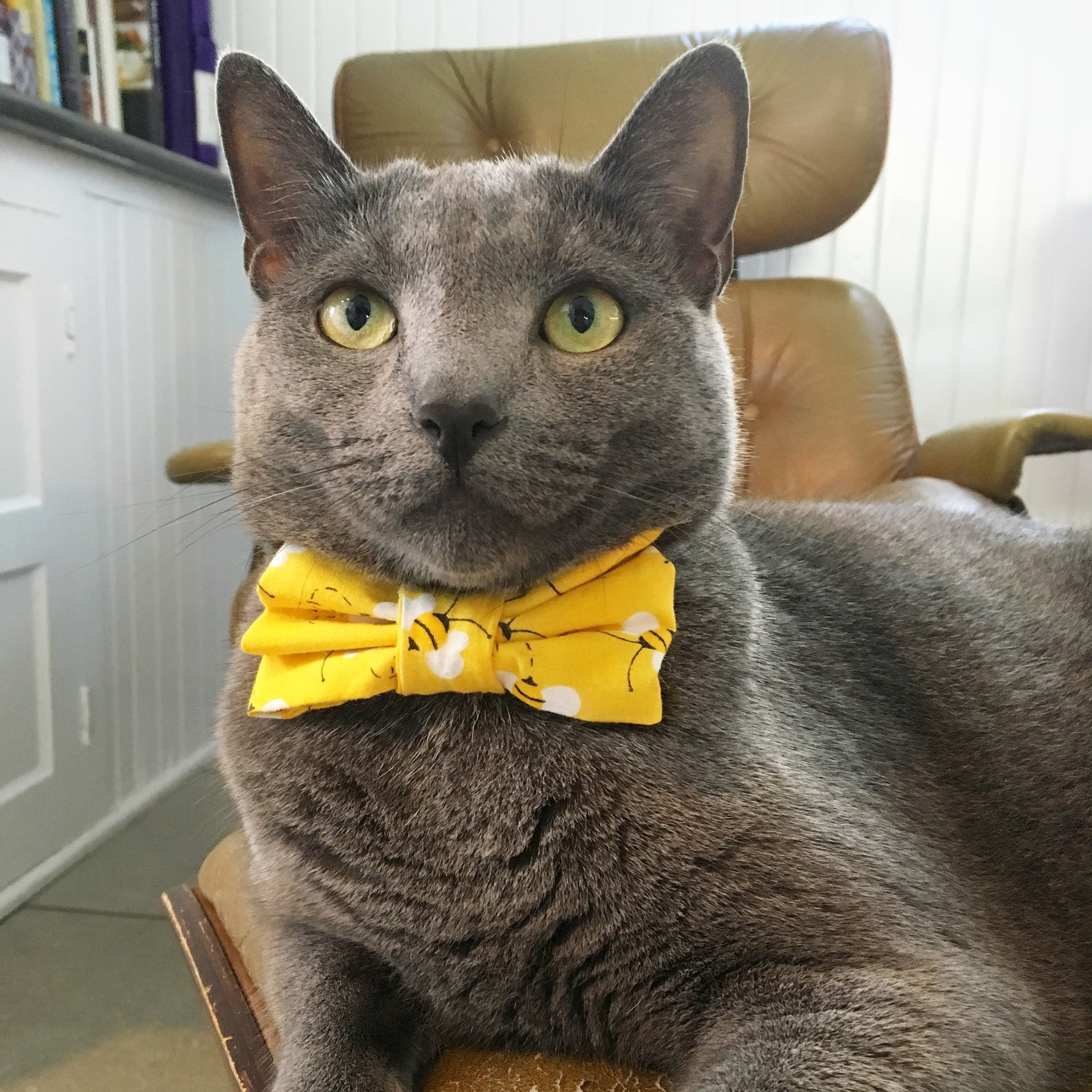 I know I'm handsome.