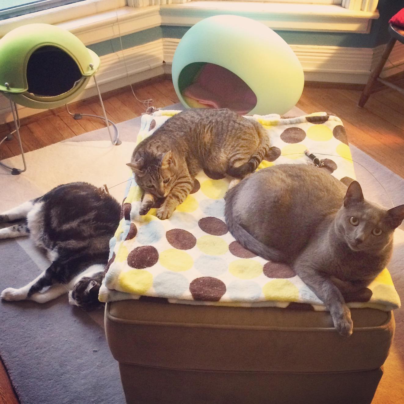 Cat gang
