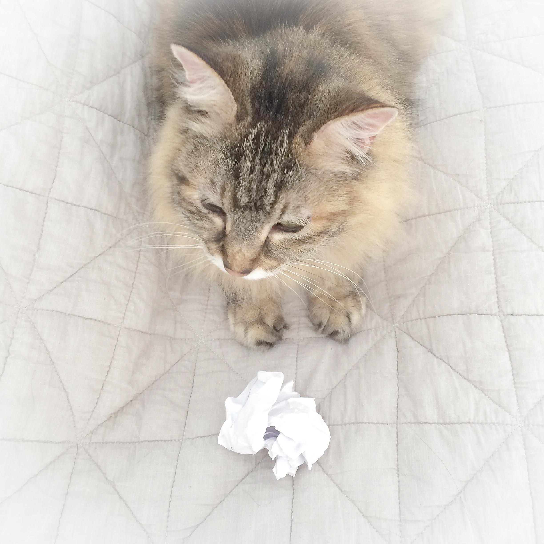 That-Cat-Blog-Image-7.jpg