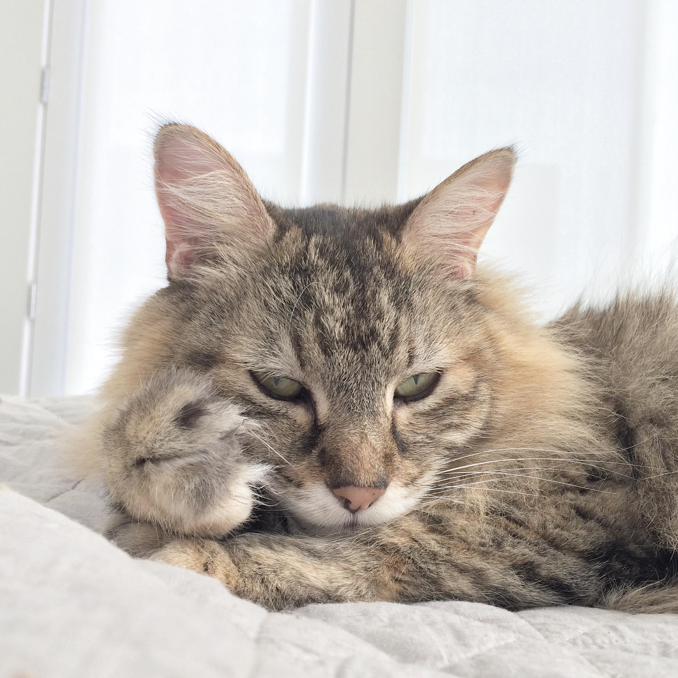 That-Cat-Blog-Image1.jpg