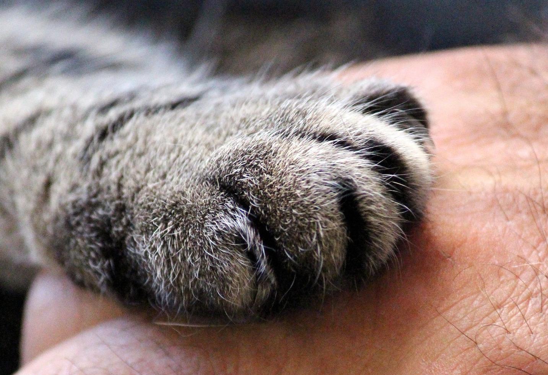 cats-paw-1375792_1920.jpg