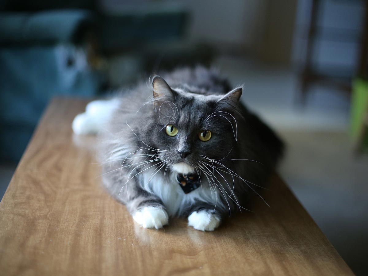 Moe has it all – good looks AND purr-sonality! / Image via banfield.com