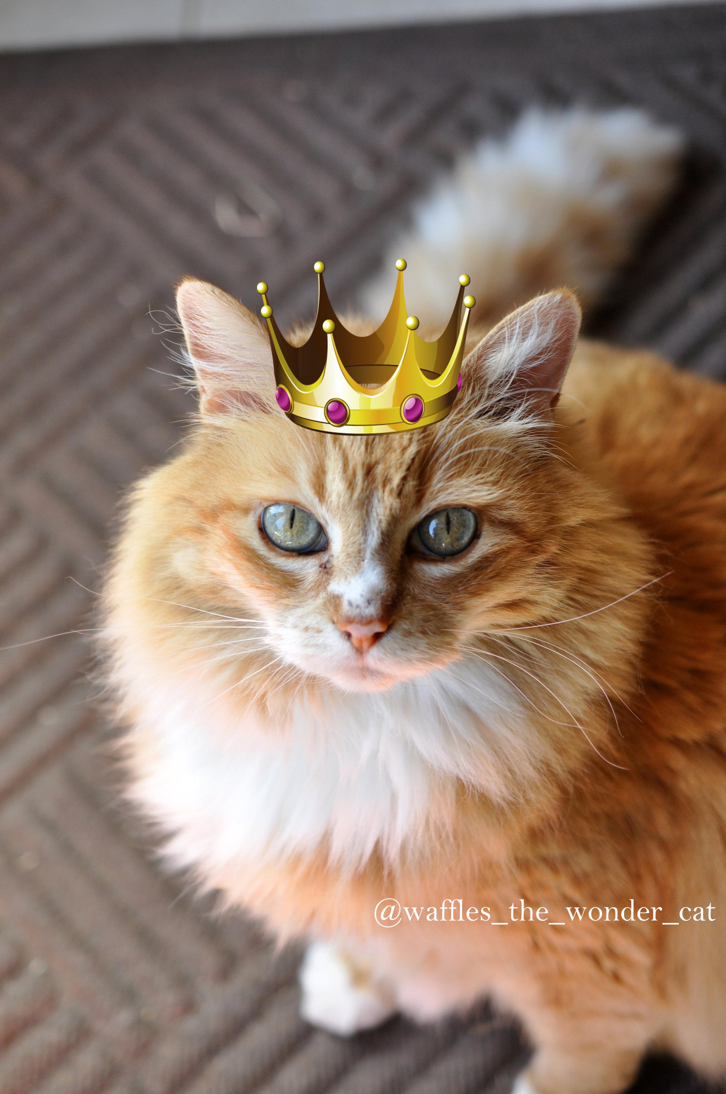 YAS queen!