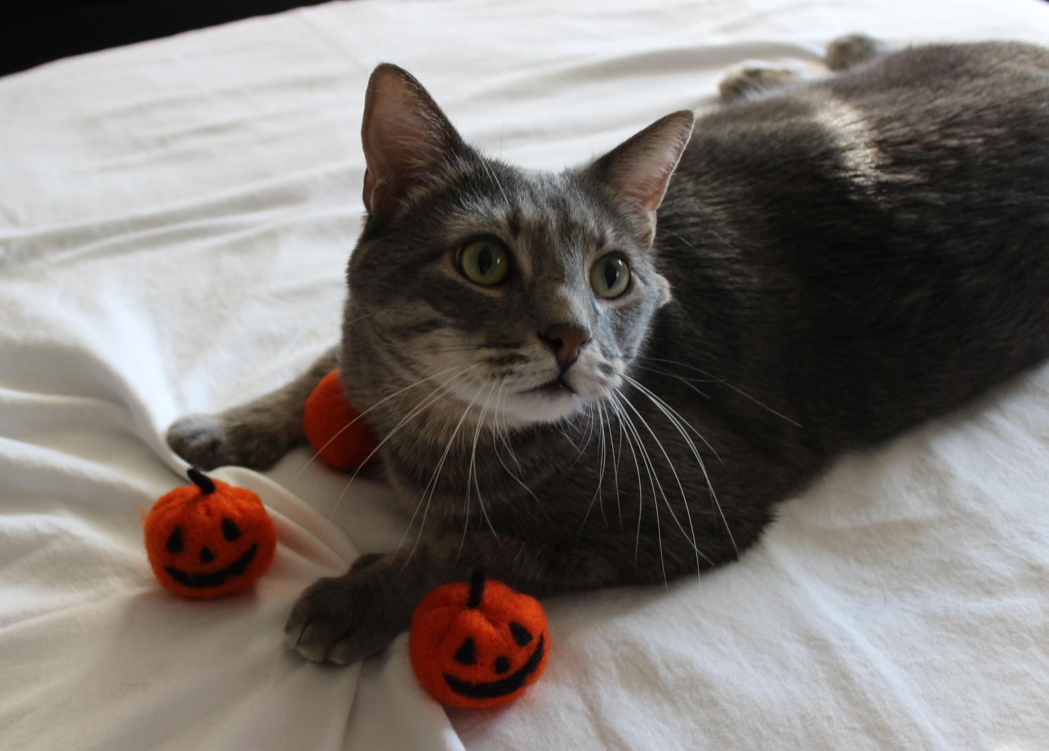 Seasonally themed kitty toys for a seasonally themed kitty