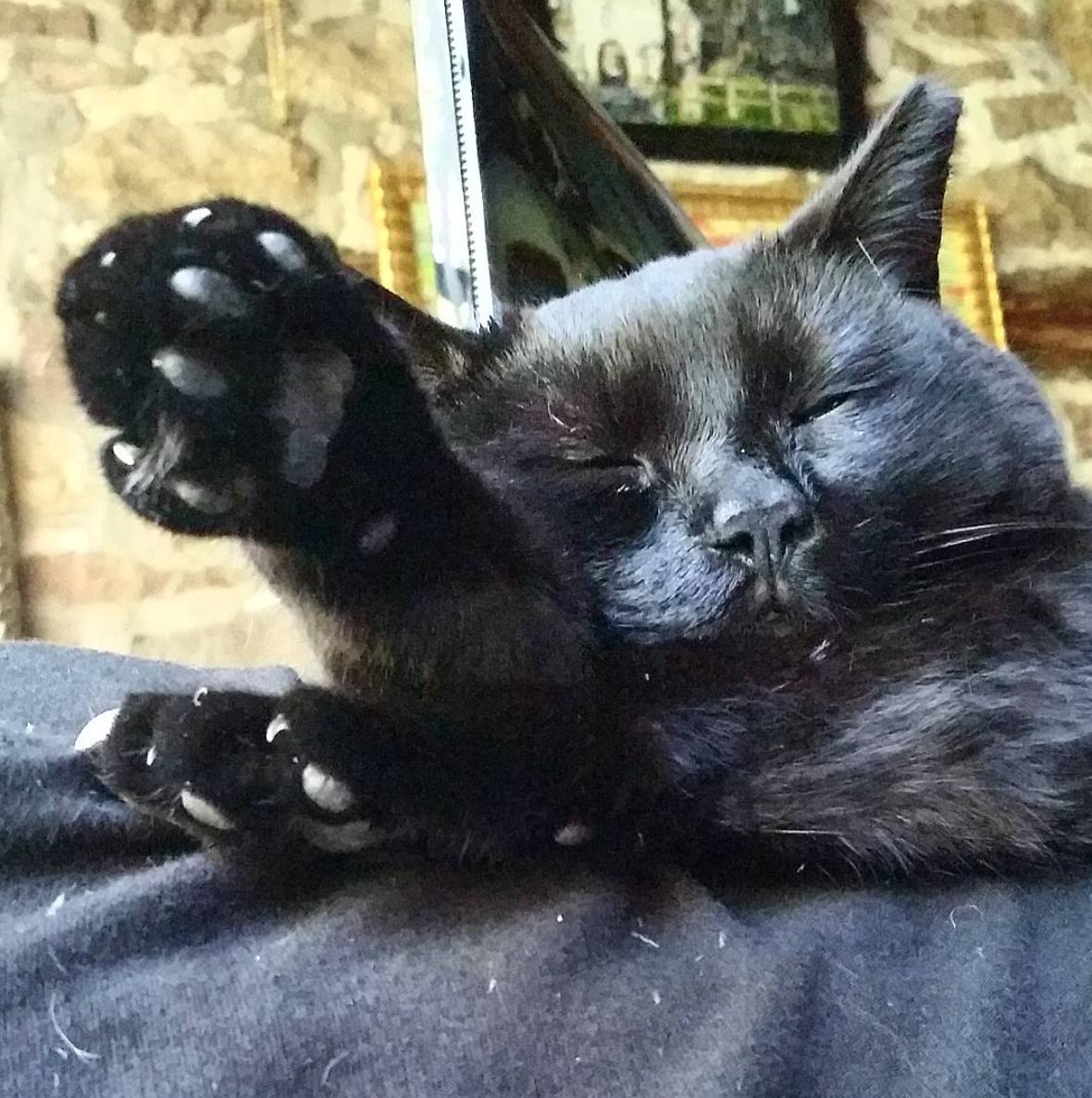 Must….take….nap…..zzzzzzzzzzzzz