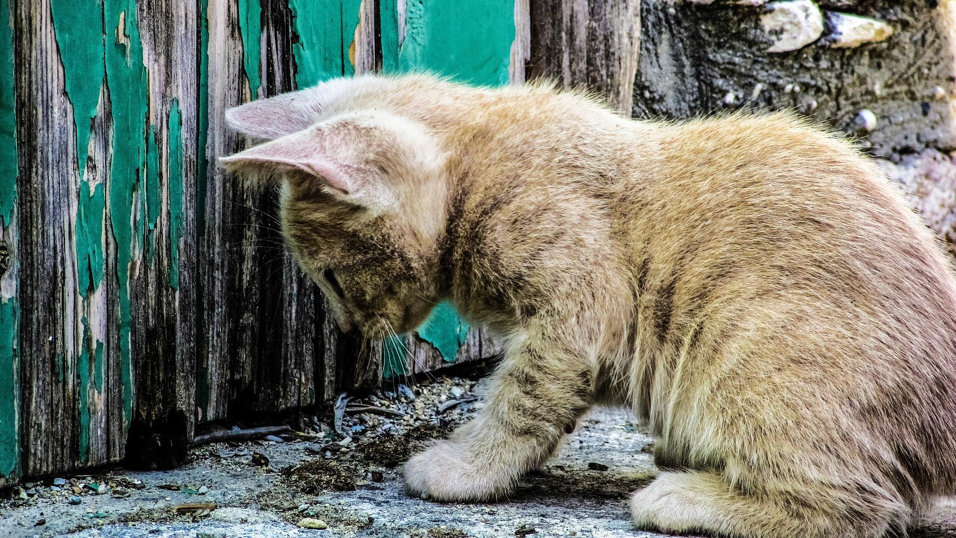 cat-1577135_1920.jpg