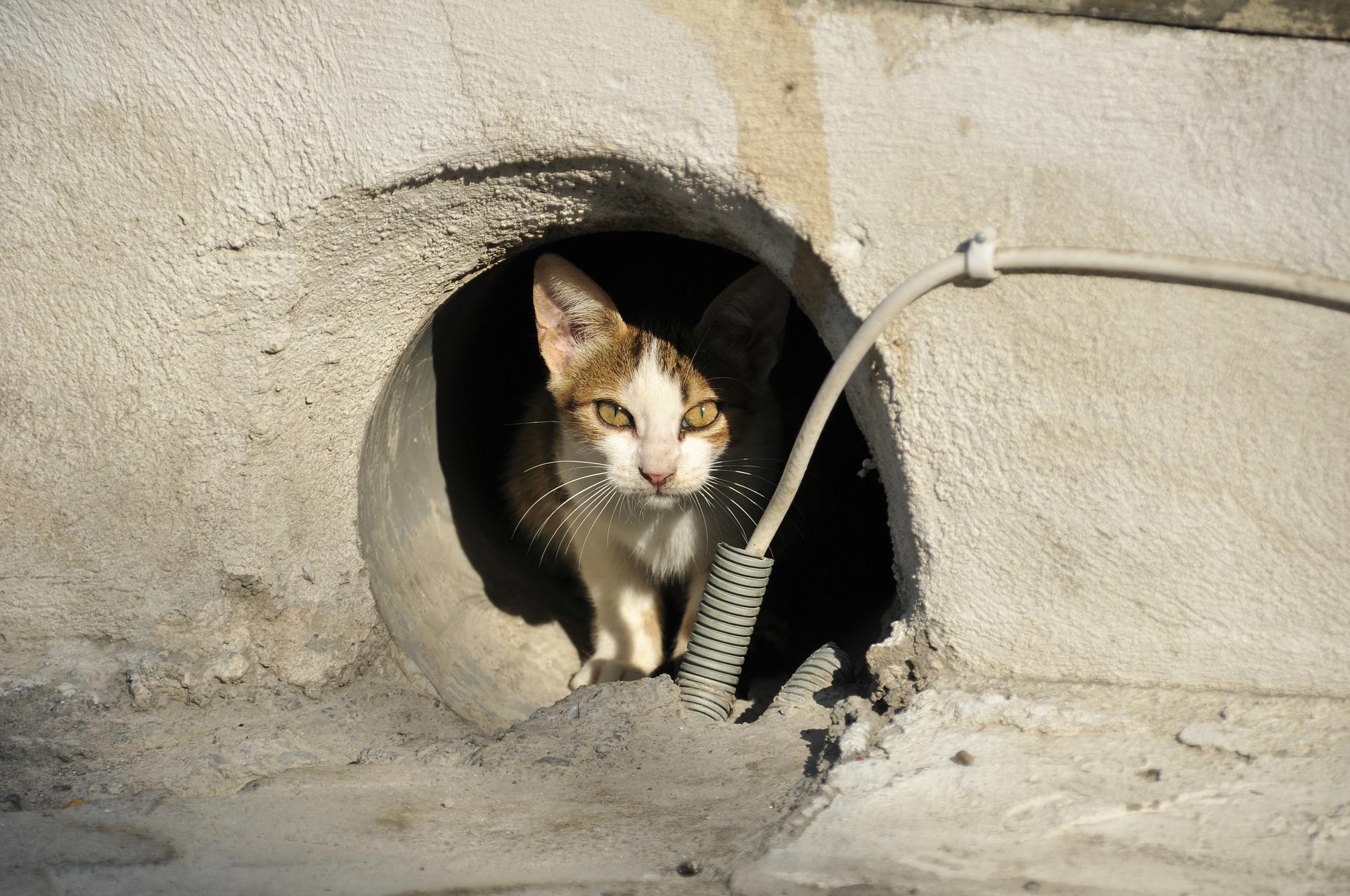 stray-cat-169113_1920.jpg