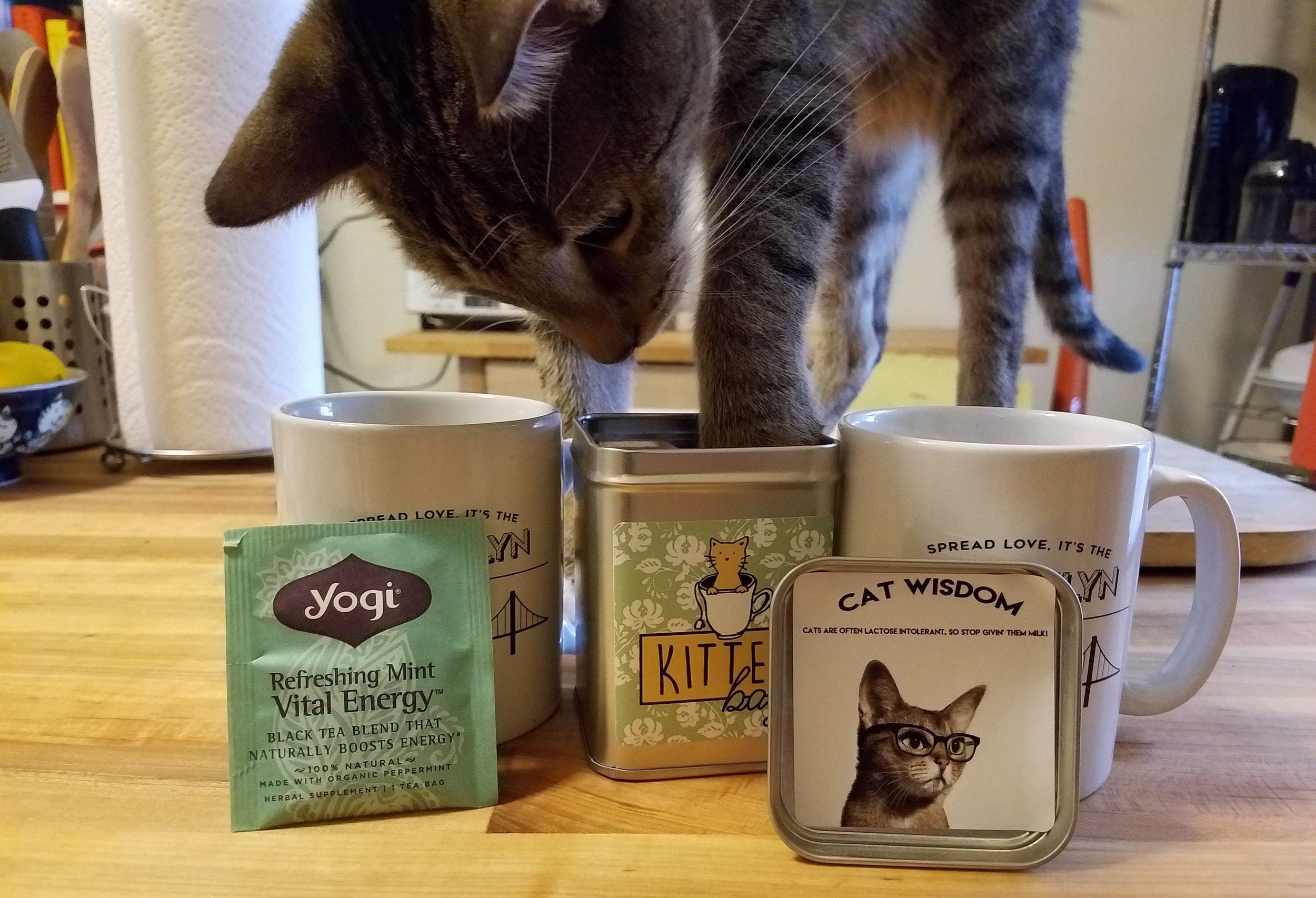 Review Pet Winery S Kittea Catnip Tea Bags That Cat Blog