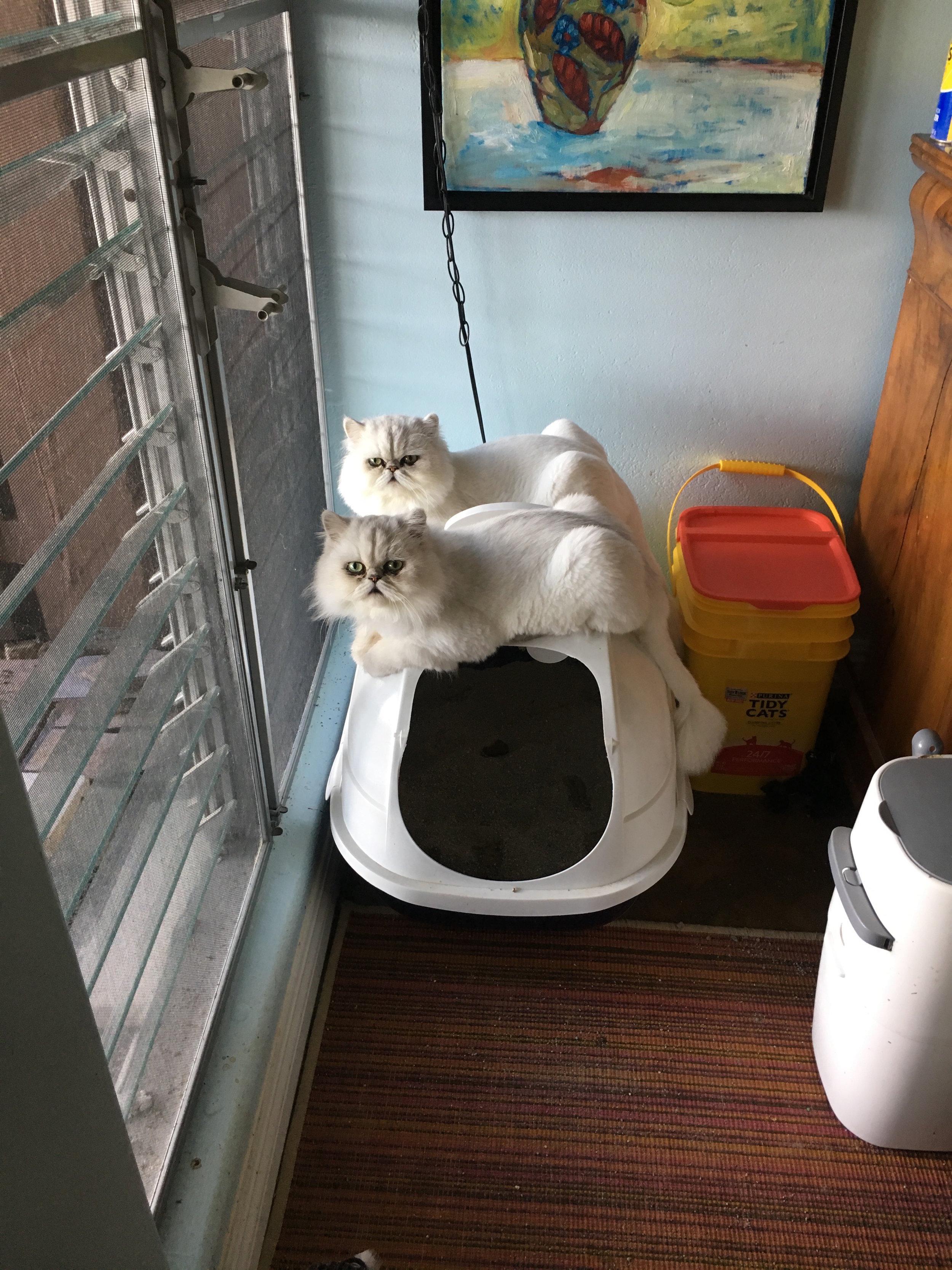 Twinning on the toilet