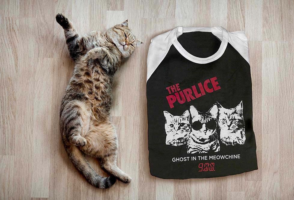 Purlice_Cat_wood_floor_89832197.jpg