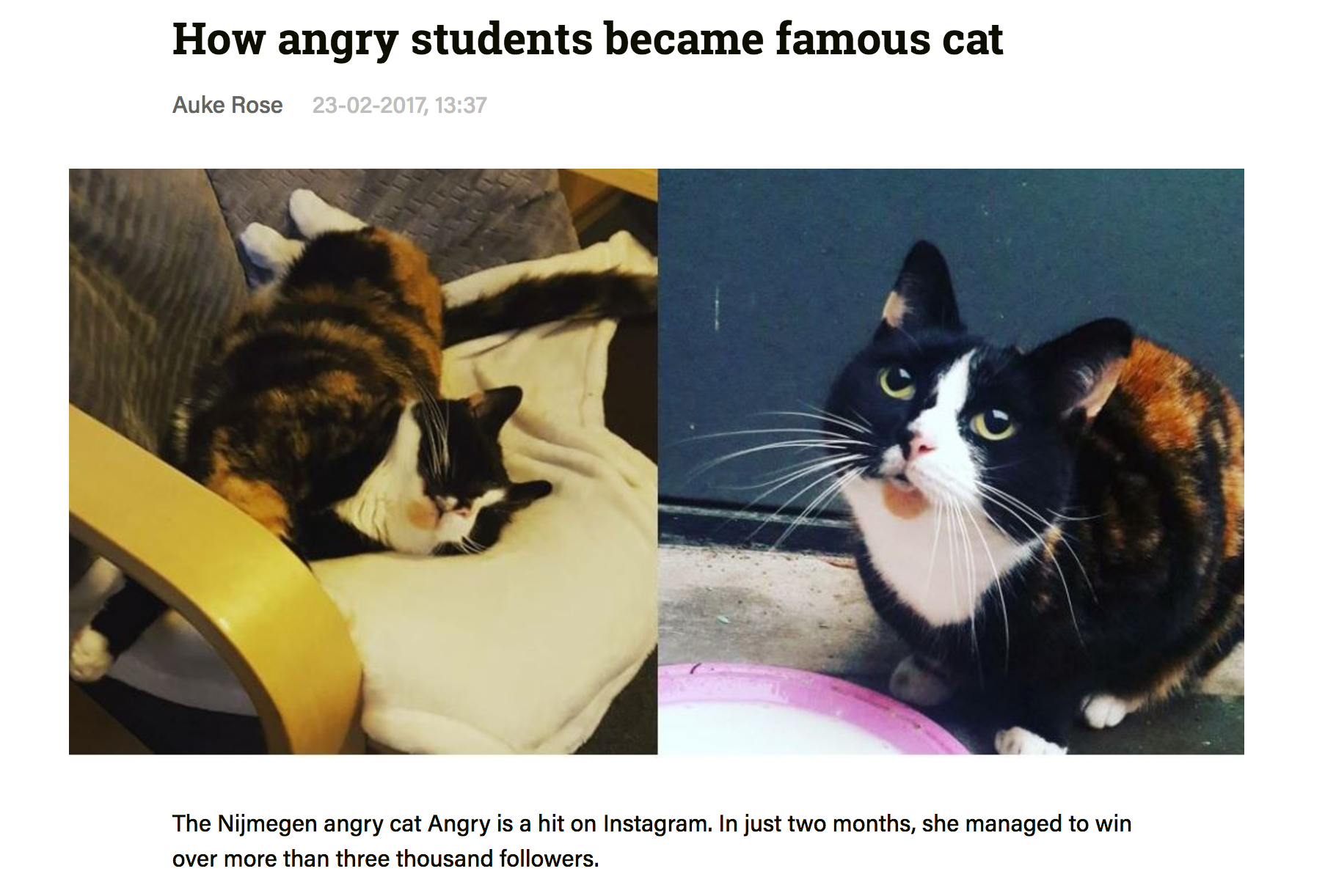 "So ""Google Translate"" isn't exactly accurate … here is the original link: http://voxweb.nl/nieuws/angry-cat-instagram"