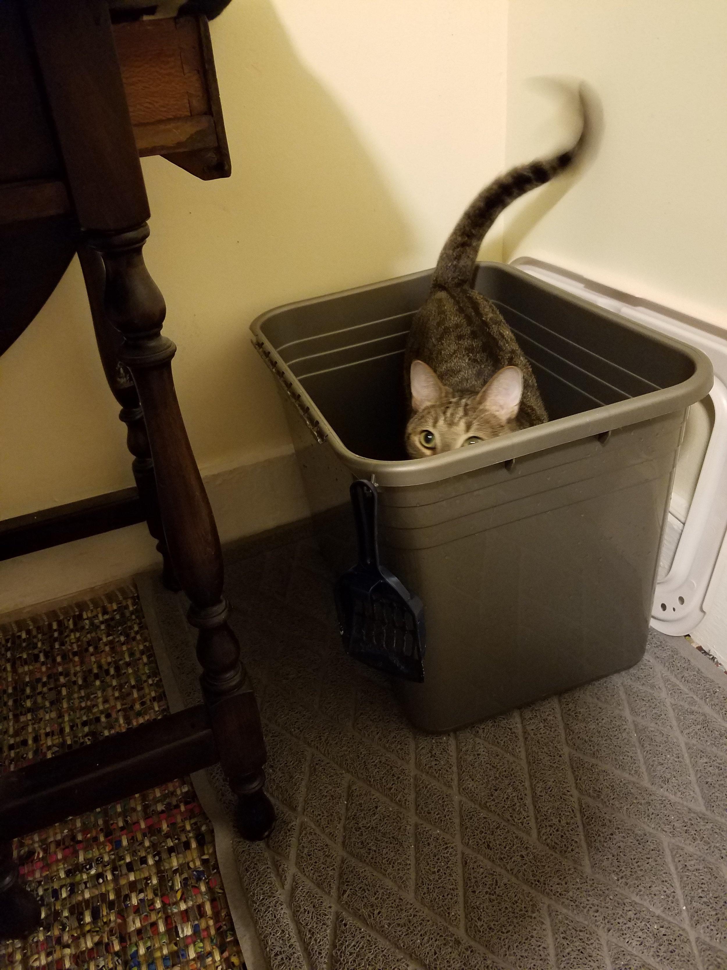 """Mooooo-ooom! Some privacy please?!?"""