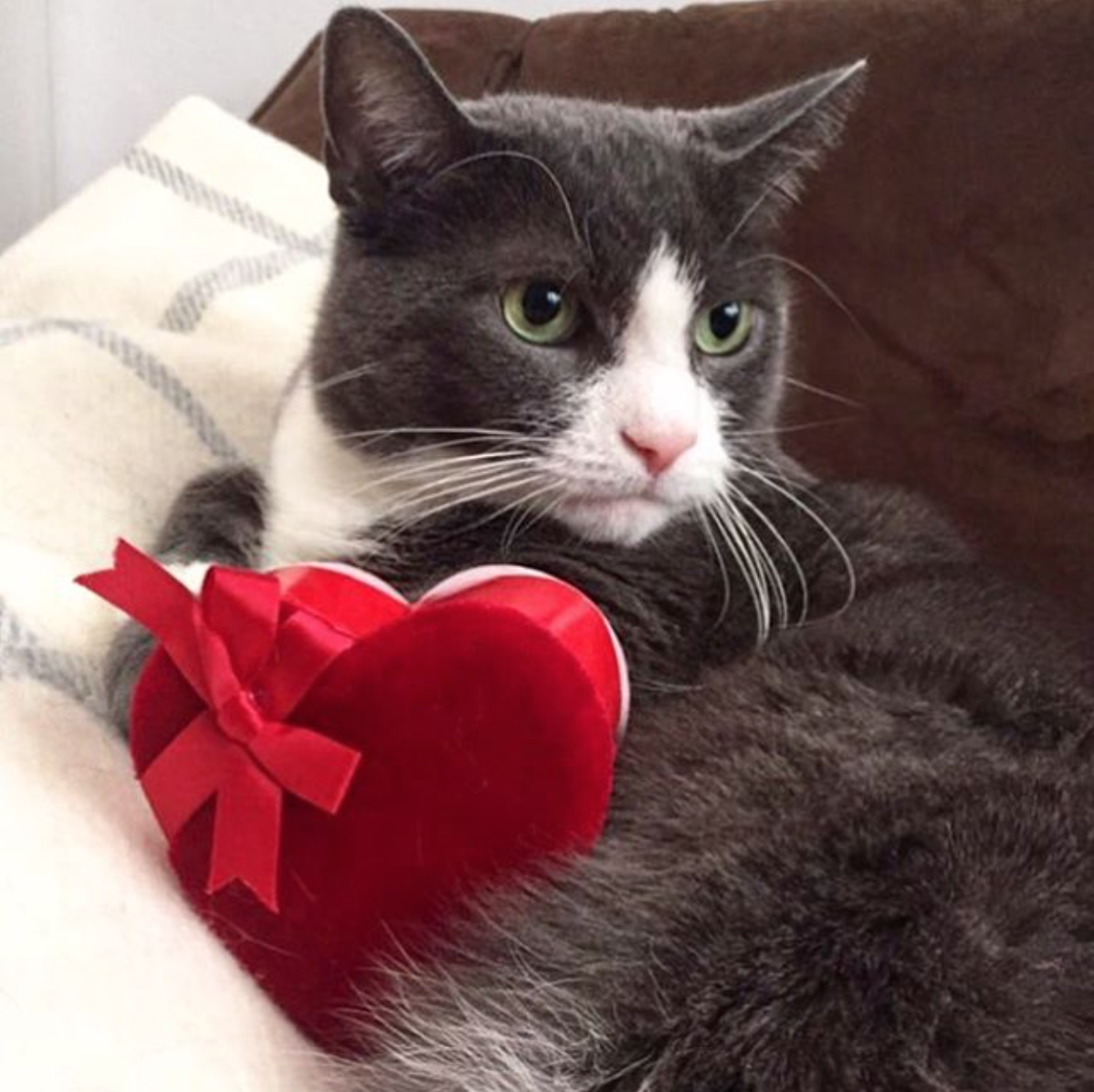 petie-bear-with-valentine-heart-cat-toy