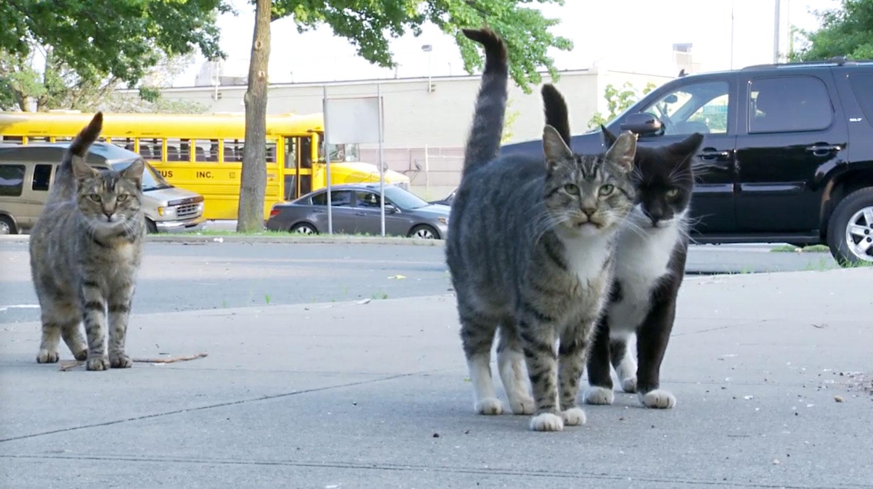 Cat gang.