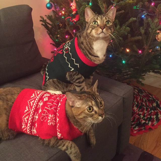 """To the fool who invented cat sweaters .... WE'LL FIND YOU..."""