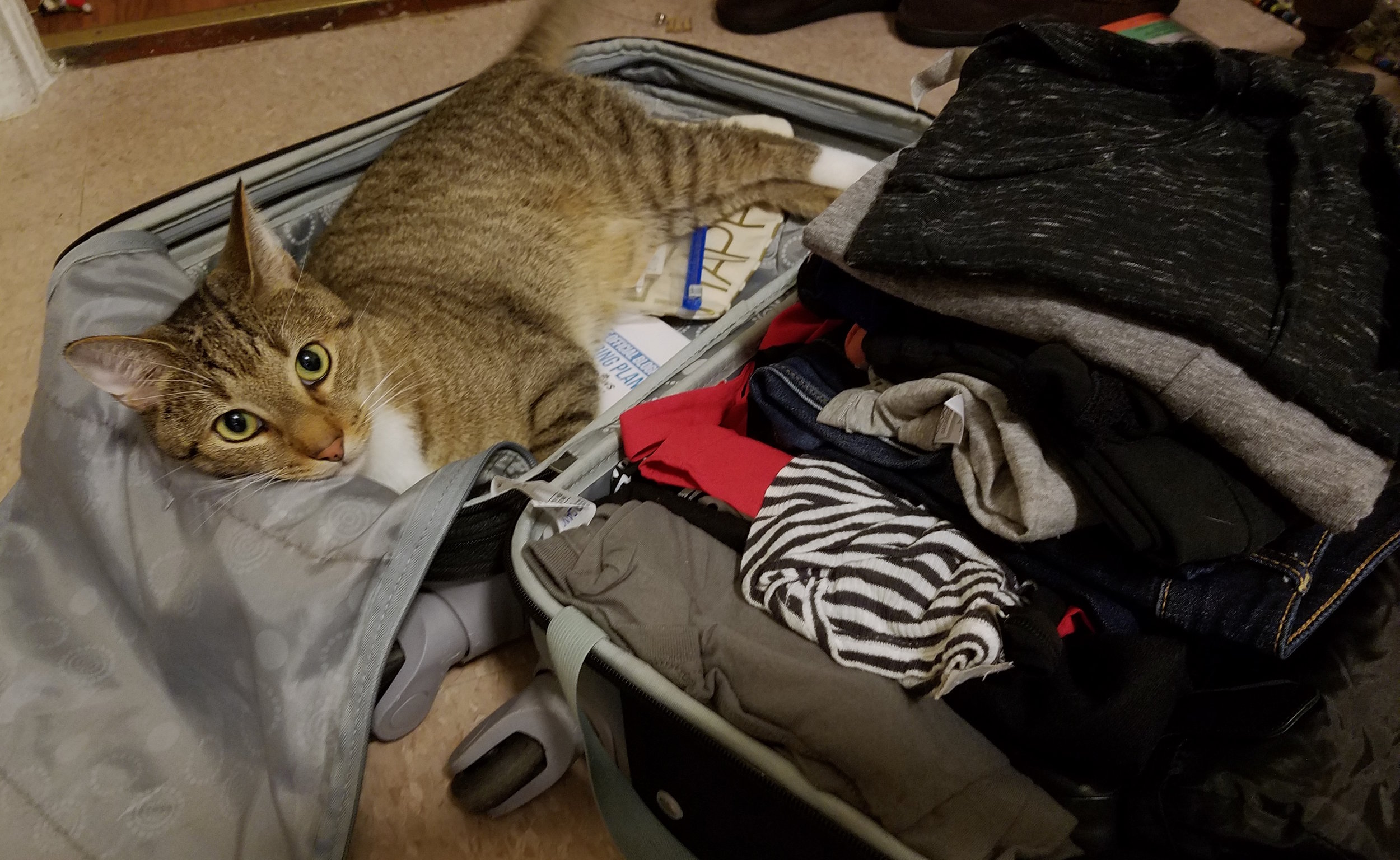 When I returned home, Thomas quickly figured out which side of the suitcase I put all the catnip toys in...