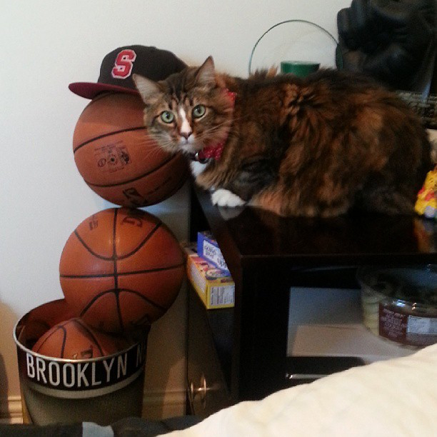 Poupin the cat (owner Brook Lopez not pictured) / Image Credit: ESPN