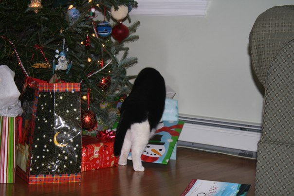 black-and-white-cat-christmas-tree-presents-that-cat-blog