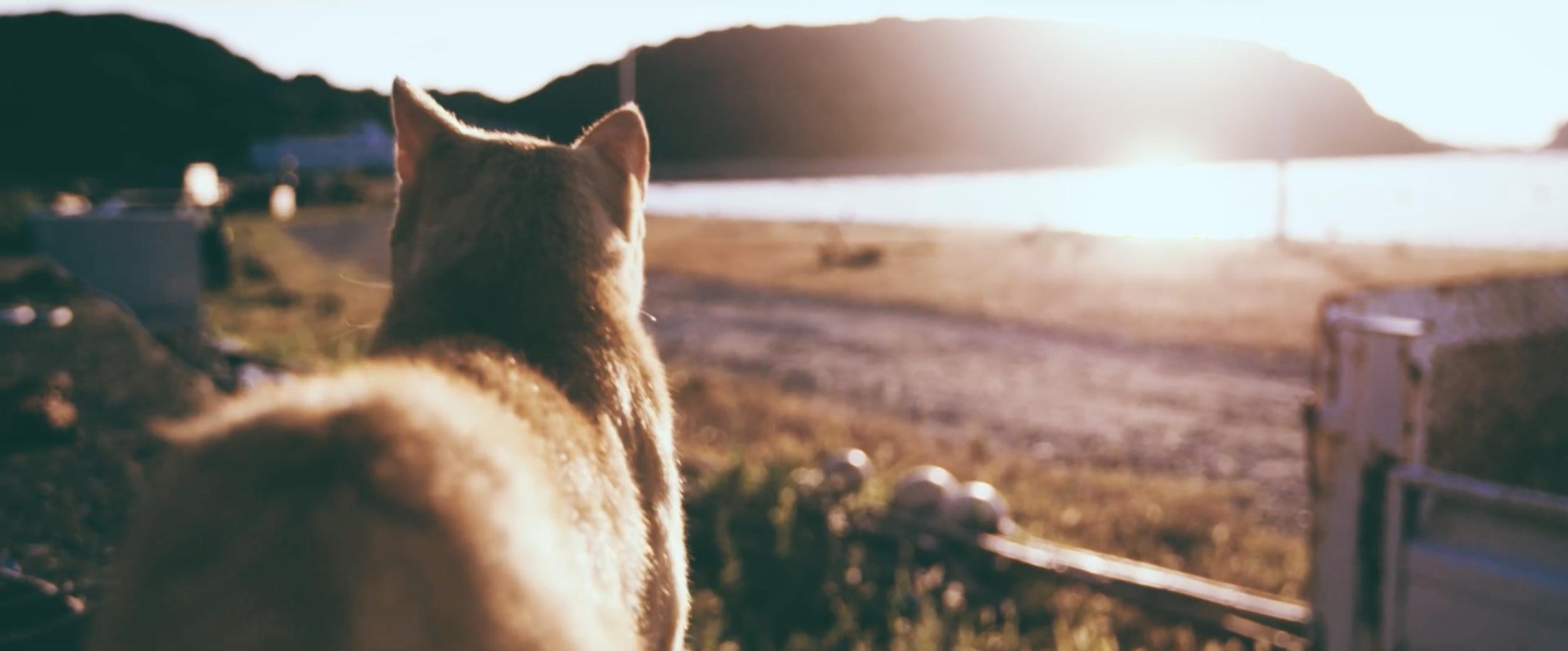 cat-island-ed-sheeran-video