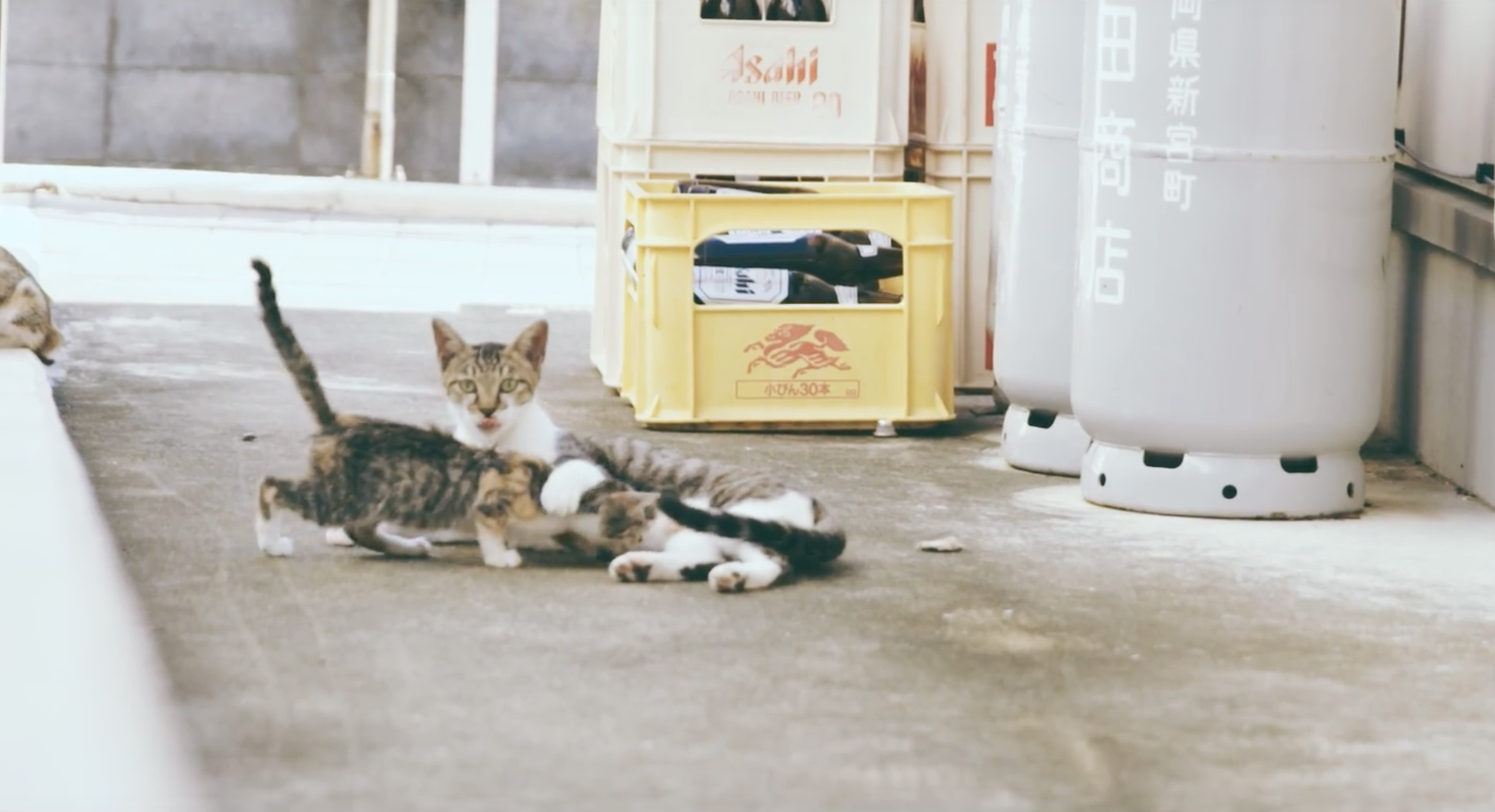 ed-sheeran-cat-island-video