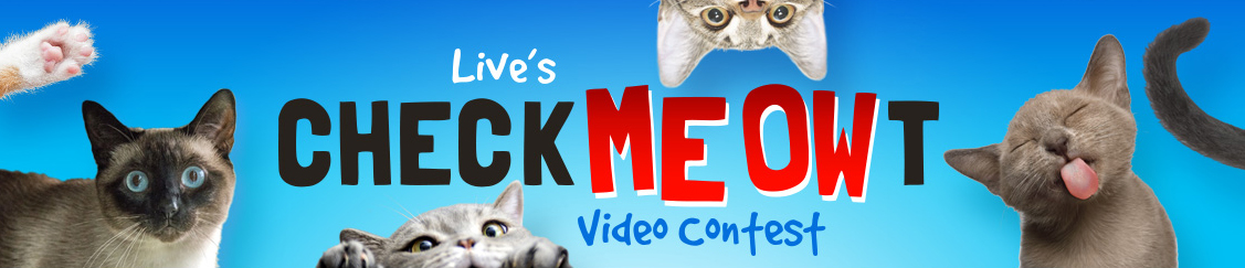 live-kelly-ryan-check-meow-t-cat-contest