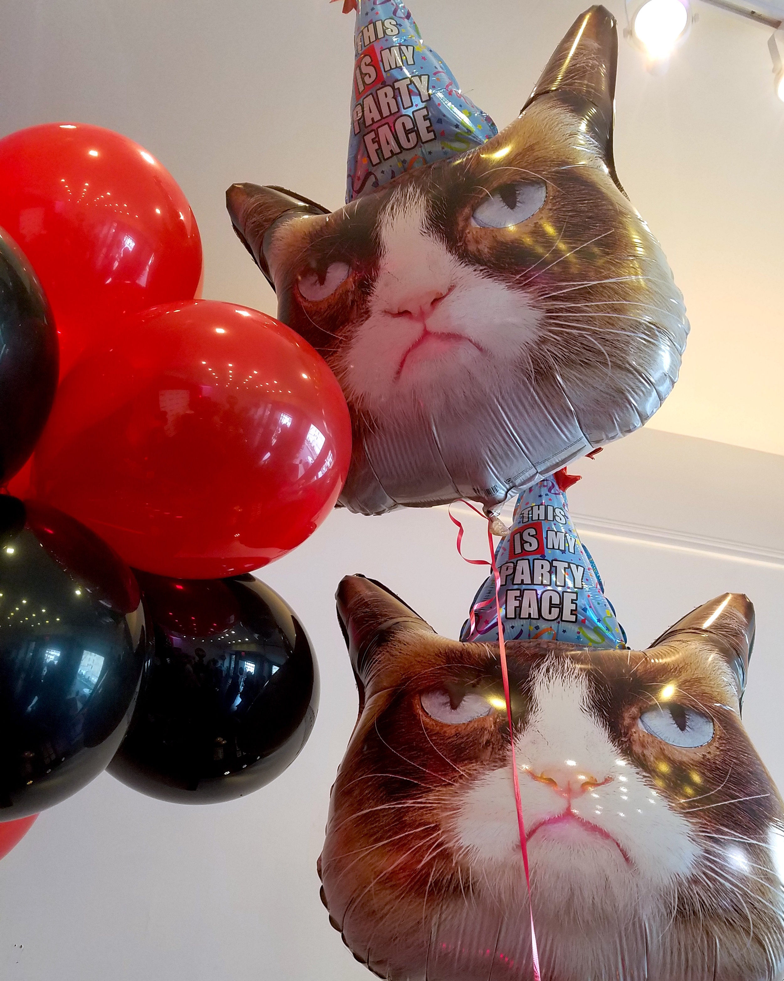 This IS my party face. // Photo: That Cat Blog