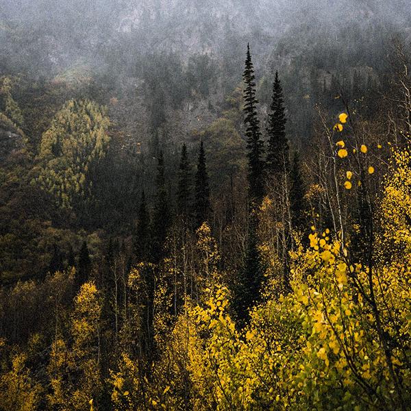 AboutUs_600x600_Trees.jpg