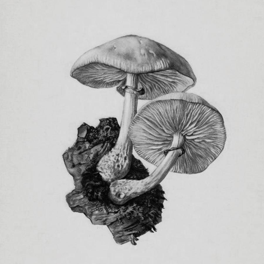 CBx_SquareIllustrations_B12_Mushroom.jpg