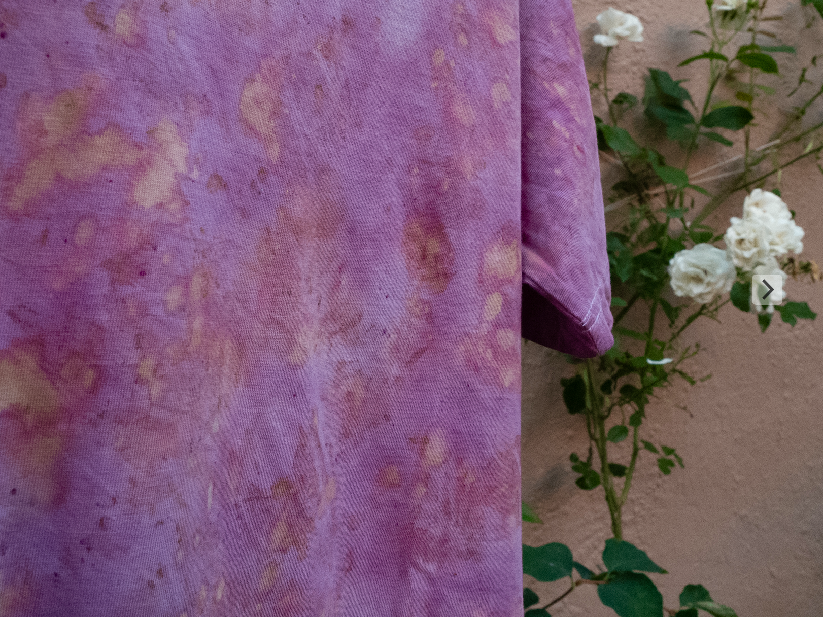 Compos, cochineal detalj .png