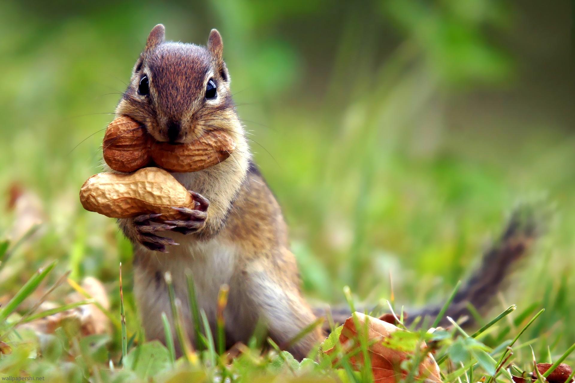 squirrel-fall.jpg