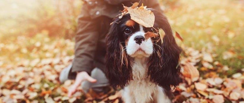 autumn-energy-saving.jpg