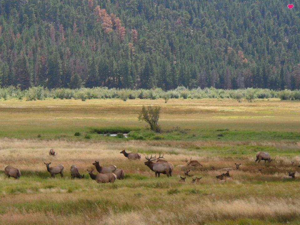 Ruttin' Around Elk Viewing — Green Jeep Tours