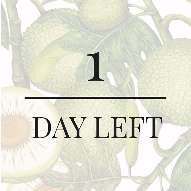 🌿 1 more day 🌿 The wait is *ALMOST* over! Ready for a tropical holiday... for your skin? 🏖 Our sustainable, science-backed, and cruelty-free skincare system made with tropical #breadfruit officially launches TOMORROW! 🛒 BRB setting our alarms ⏰