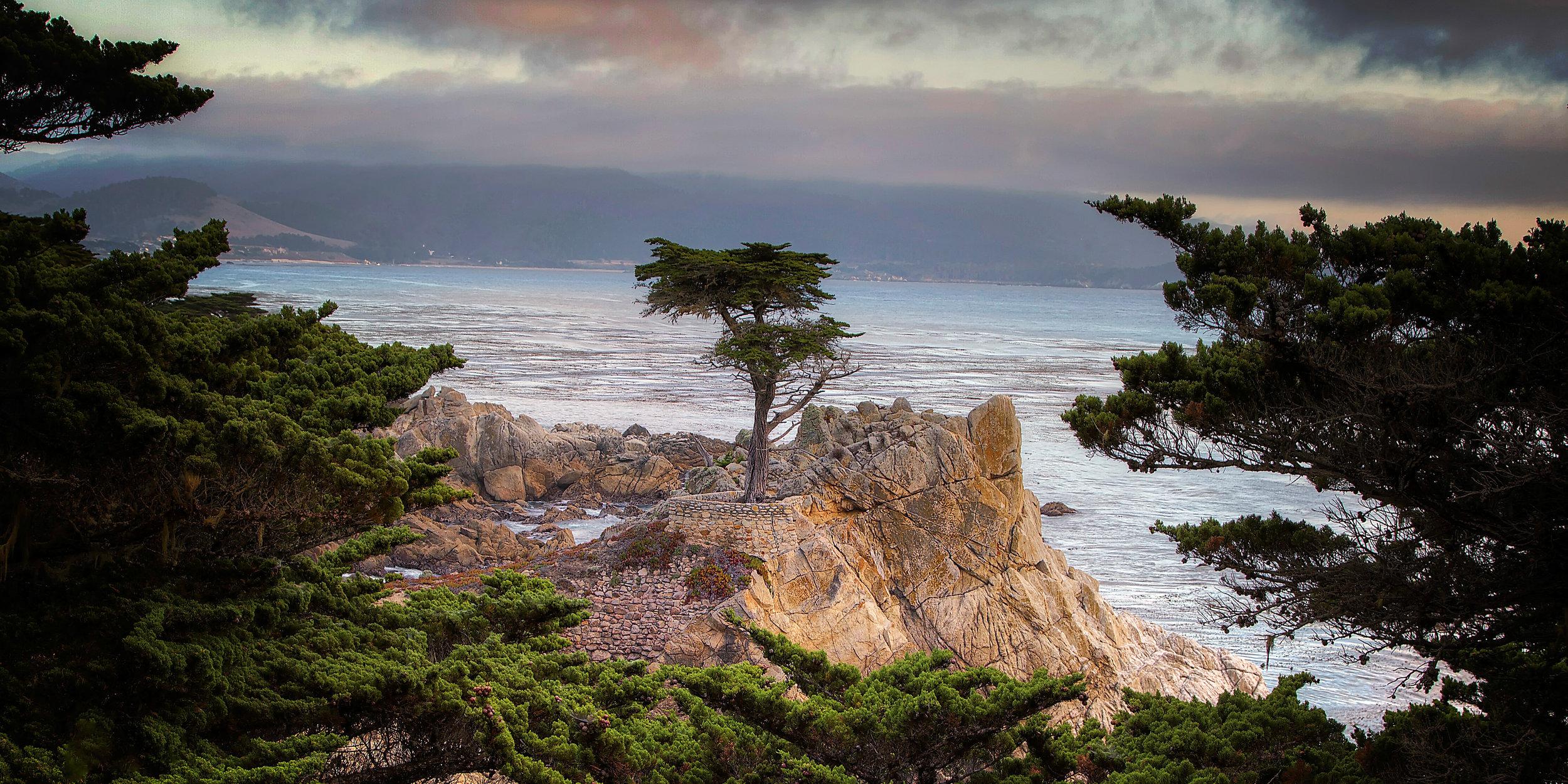Lonely Cypress 1-2 Ratio.jpg
