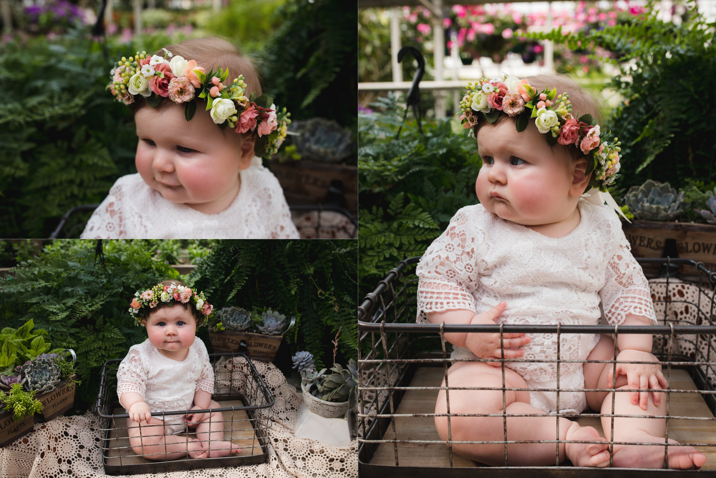 At Pierson's Greenhouse in Cedar Rapids, Iowa a baby girl is sitting in a wire crate around succulents and plants.