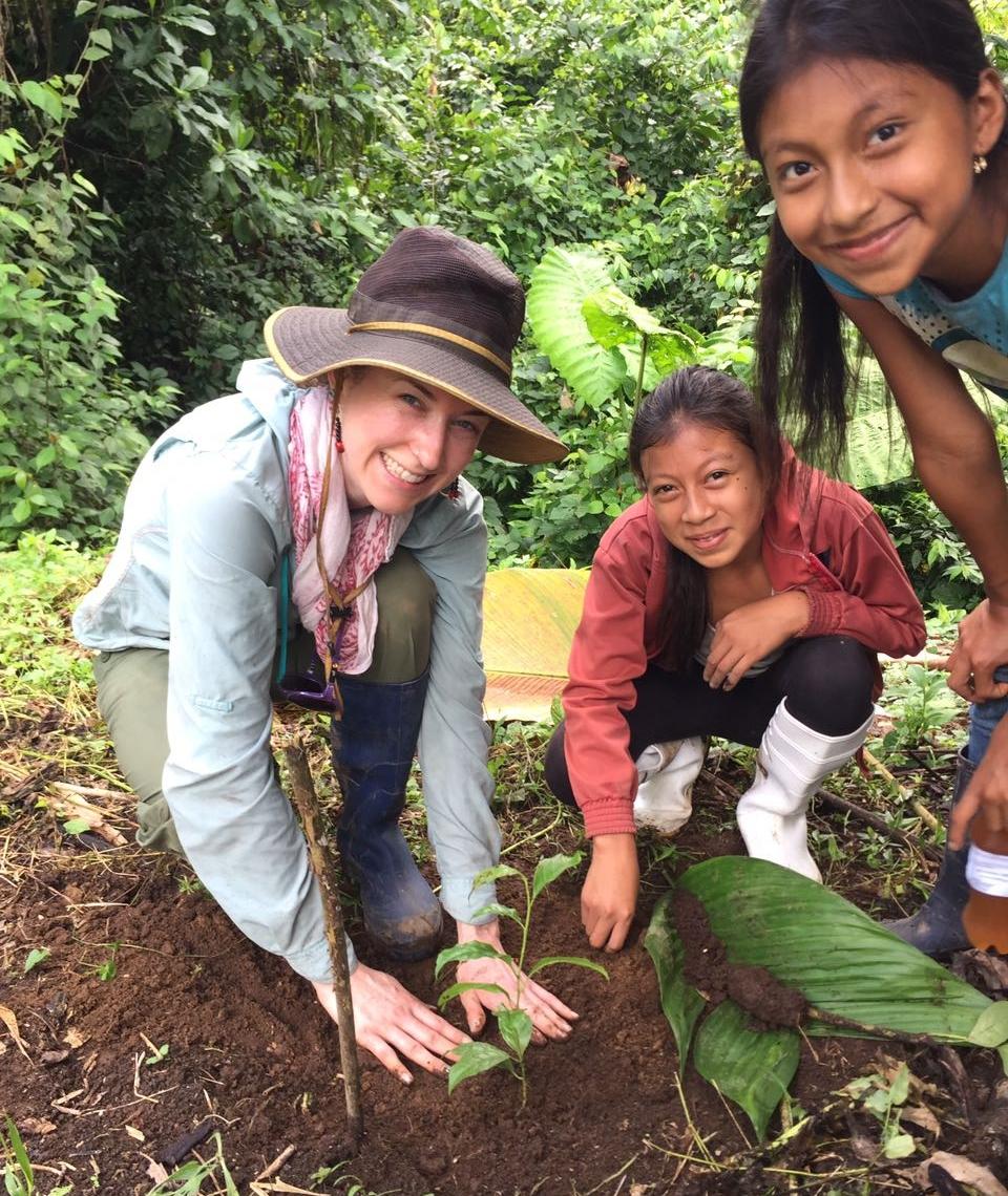 - Planting baby Guayusa trees
