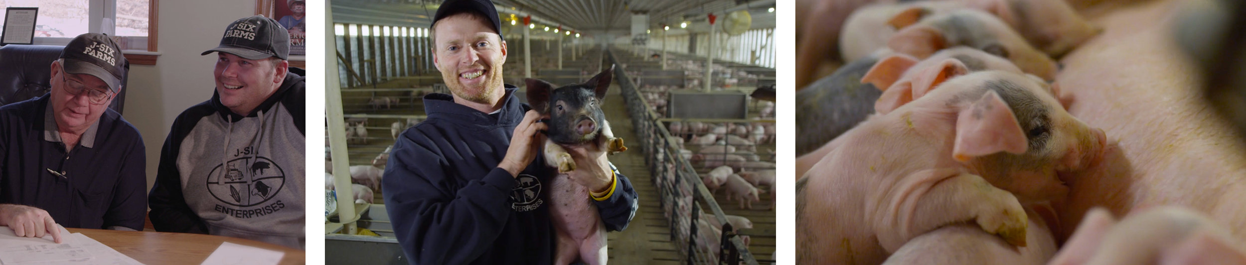 Livestock123.jpg