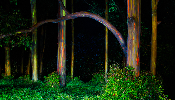 PAINTED FOREST-2015.WEB