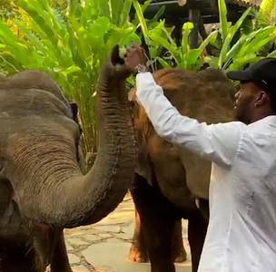BRANDIN-ELEPHANTS.jpg