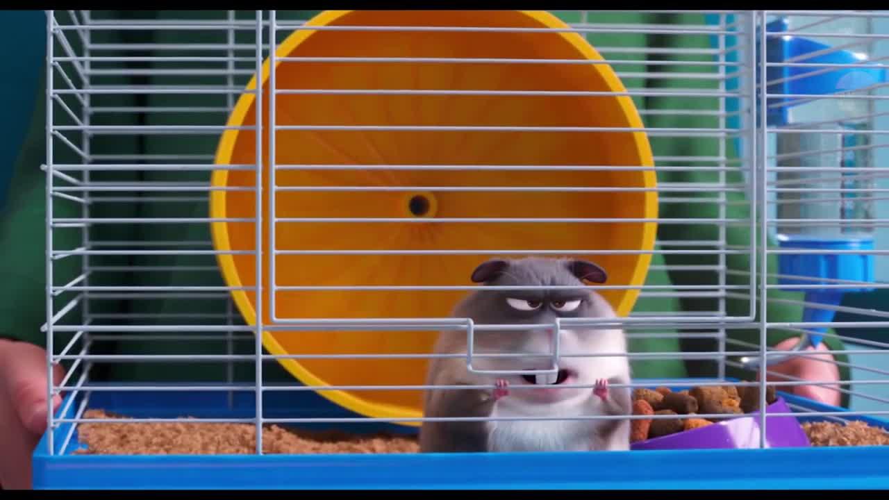 Image--Pets2_hamster.jpg