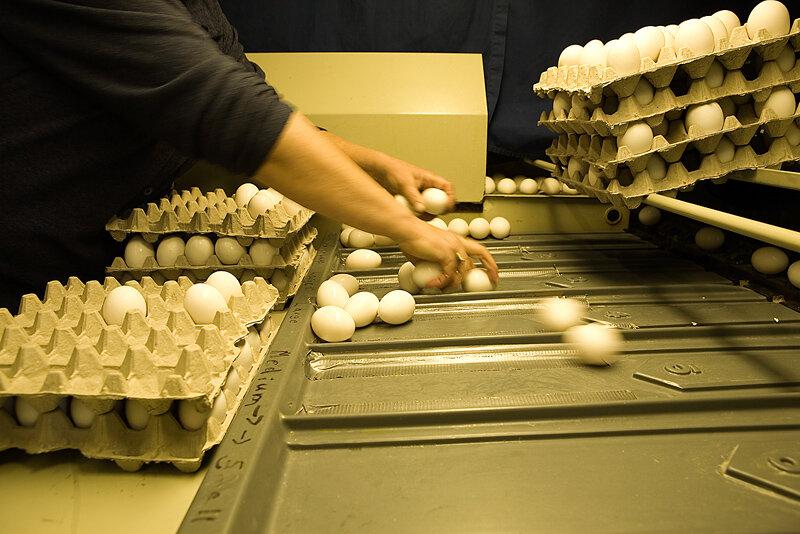 71995444--eggs.jpg