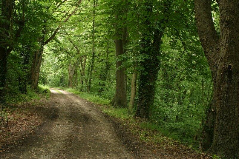 Pix_-_RoadinForest.jpg