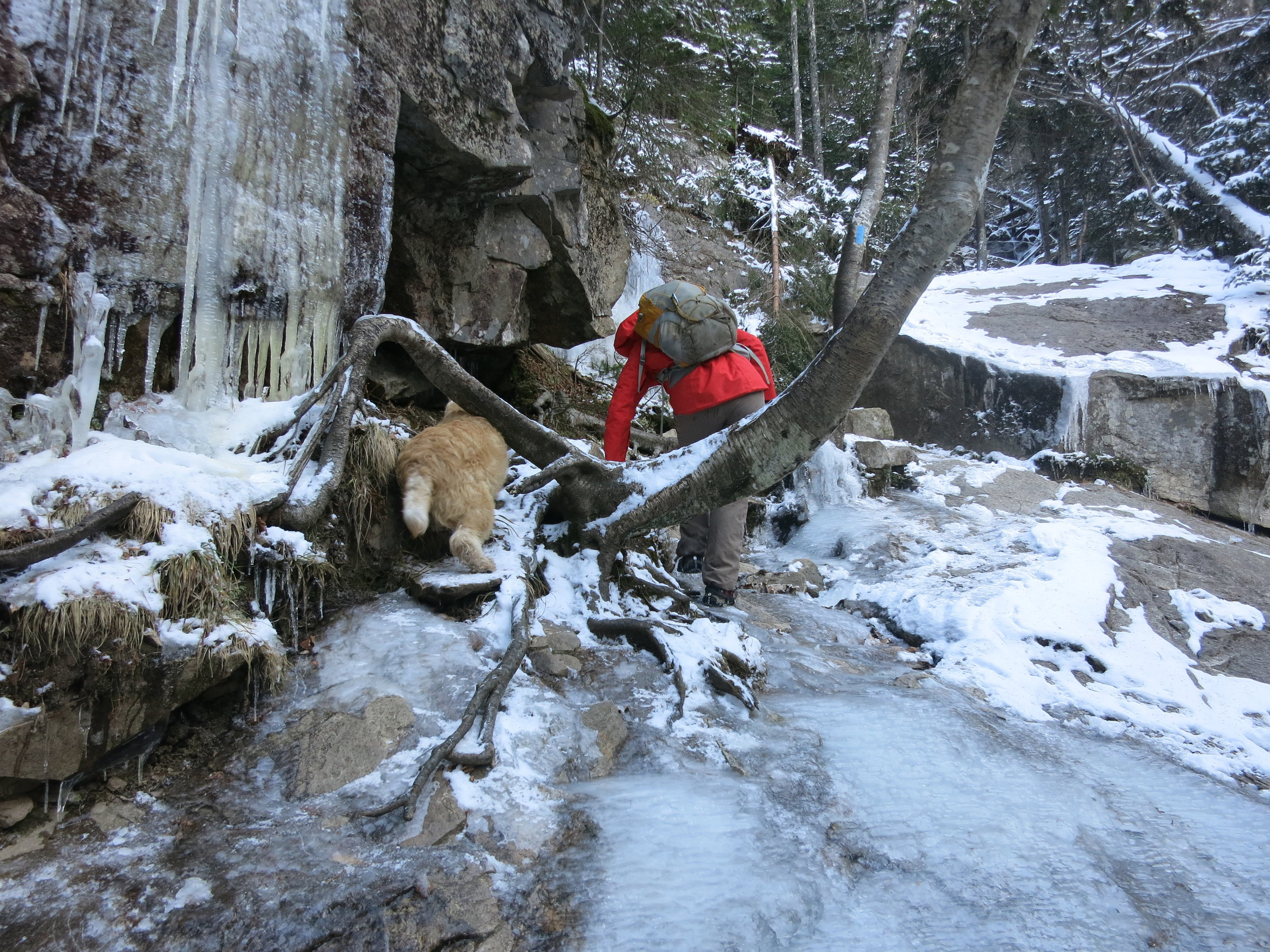The ice ledge pictured here is steeper than it looks and drops off into a waterfall. That's why the dog decided to head under the tree root.