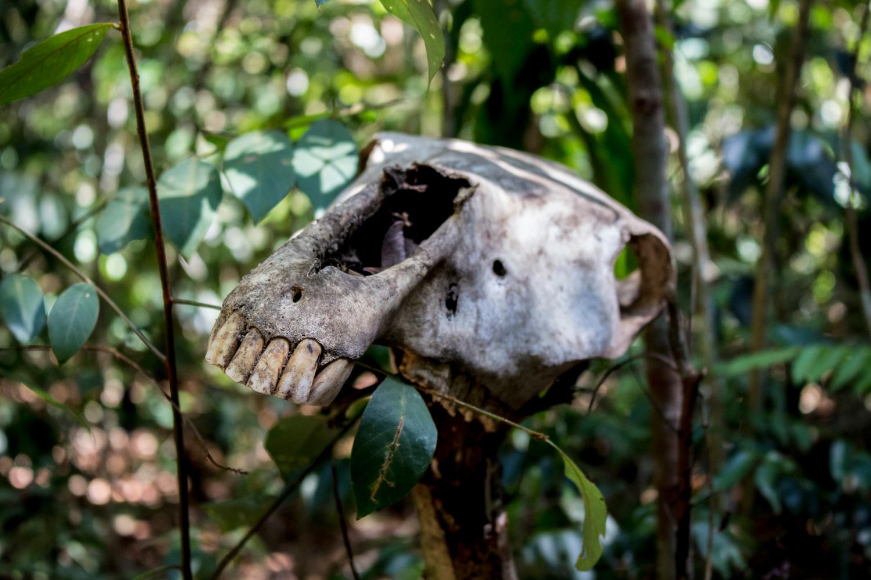 Boar-Skull-Hiking-In-Pangkor.jpg