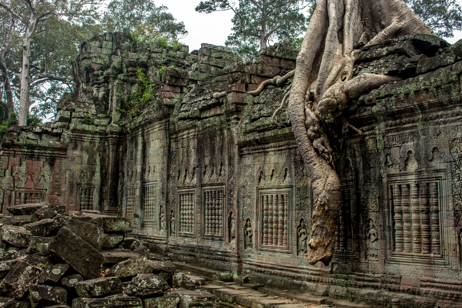 The Forest and Temple Mix at Preah Khan