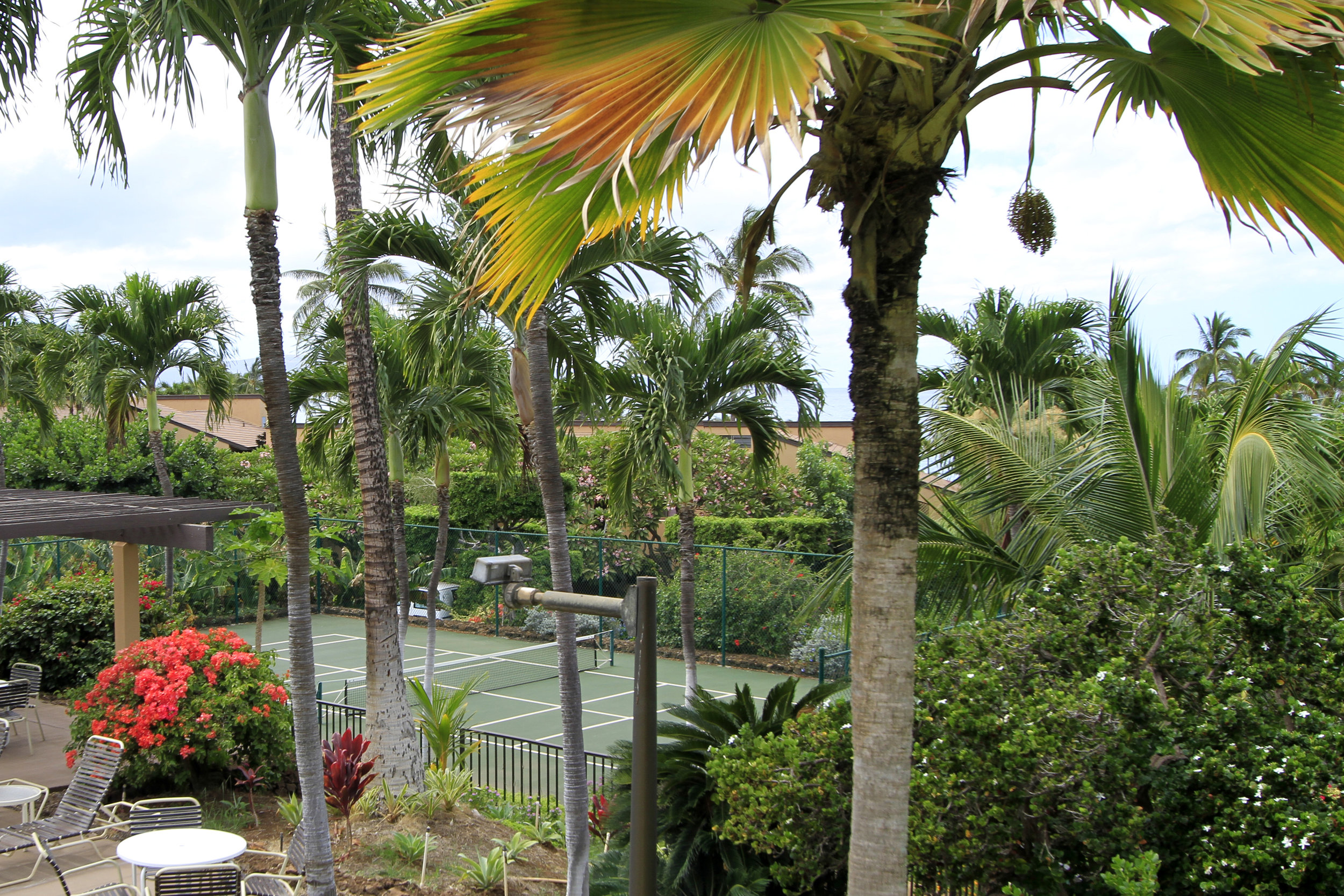 Peakaboo view of the pickleball courts